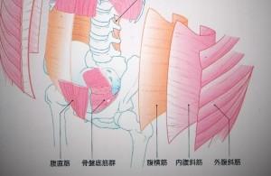腹筋 (3)